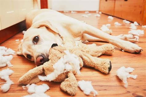 dog not eating what to do when your dog eats something they shouldn t