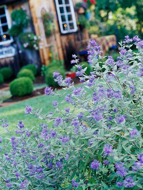 flowering shrubs that bloom all summer the 13 best summer blooming shrubs really home