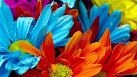 colorful wallpapers of flowers colorful windows 10 wallpapers