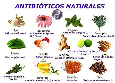 alimentacion saludable alimentos antibioticos educacion esencial