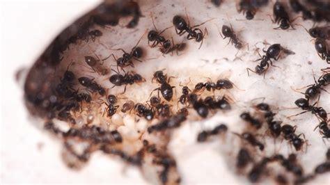 Was Hilft Gegen Ameisen Auf Der Terrasse 3700 by Backpulver Und Zucker Gegen Ameisen Frag Mutti