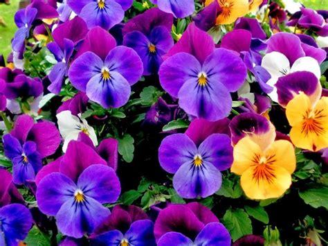 imagenes a flores im 193 genes de flores rosas margaritas cl 225 veles y m 225 s