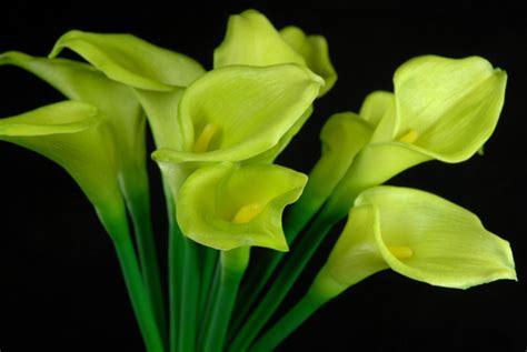 Natural Touch Hand Tied Green Calla Lily Wedding Bouquet 14""