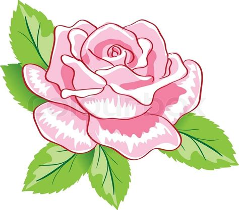 beauty pink rose background colorful vector illustration