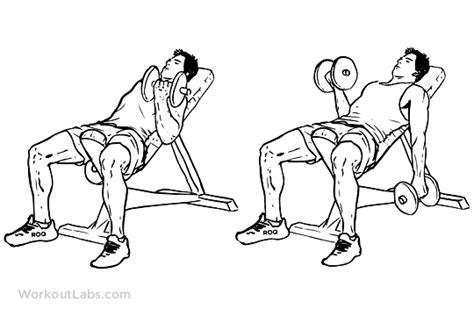 incline bench bicep curls seated alternating incline bench dumbbell curls workoutlabs