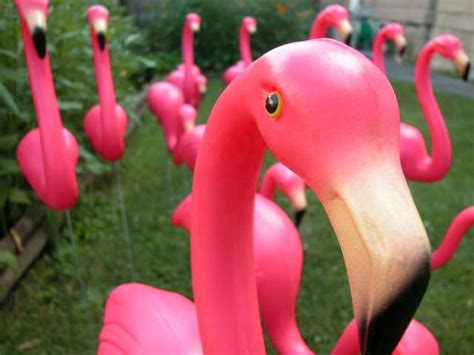 plastic flamingos a flock of flamingos i am the lizard queen