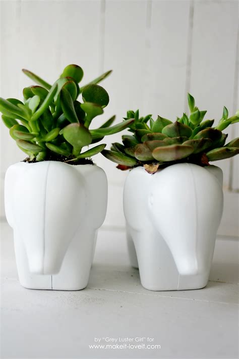 succulent planters for sale 37 images marvellous succulent planter ideas 100 succulent