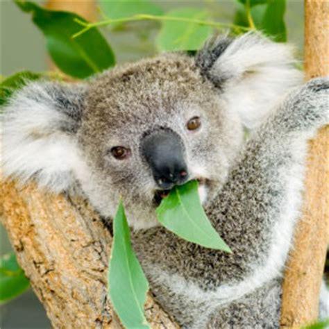 native australian animals collage