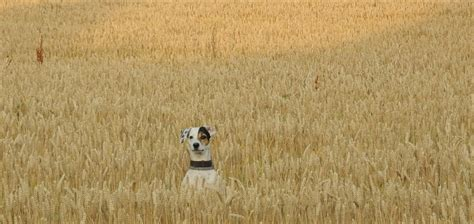is grain bad for dogs grain free foods for dogs understand pets