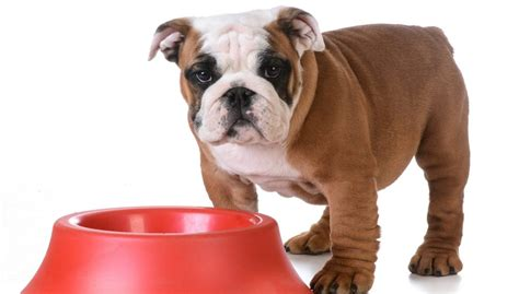 best cheap food for puppies best food for bulldogs 6 vet recommended brands