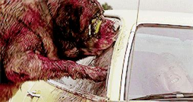 cujo gifs find & share on giphy