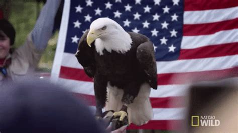 us flag gifs find & share on giphy