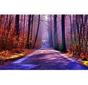 Forest Road Beautiful  HD Desktop Wallpapers 4k