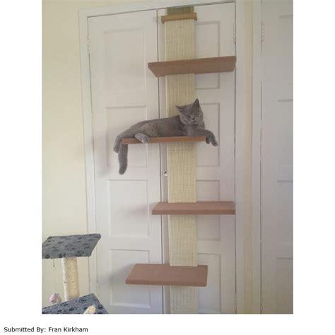 Cat Climber For Door by Customer Reviews For Smartcat Door Climber Petplanet Co Uk