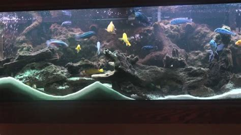 Aquascaping Reef Tank 125 Gal African Cichlid Tank Wmv Youtube