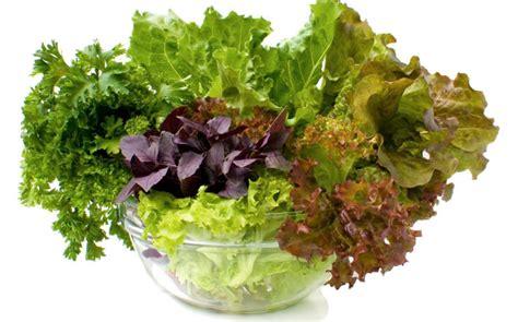 imagenes de hojas verdes comestibles propiedades y beneficios de las verduras de hojas verdes