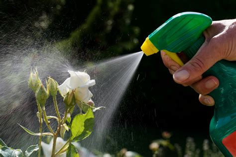 Garden Pesticides by Tips For A Bee Friendly Garden Official Of Park Seed