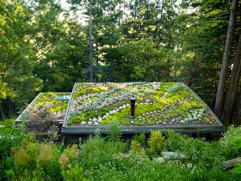 the flying tortoise beautiful living roof gardens