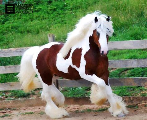 beautiful breeds the most beautiful breed in the world poison5