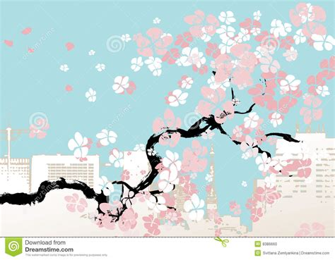 picture illustration vector illustration of cherry blossom stock photo image