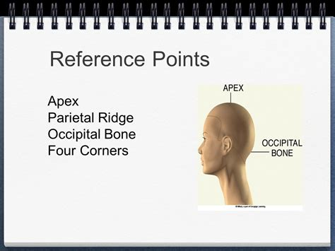 occipitsl bone do with hritcutting parietal ridge haircutting ch ppt video online download