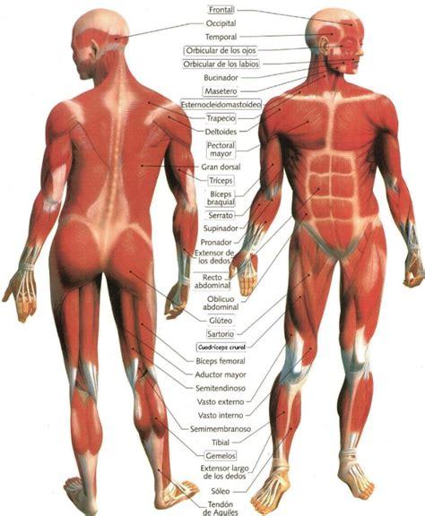 59 el cuerpo nunca mapa anatomico mepongofuerte