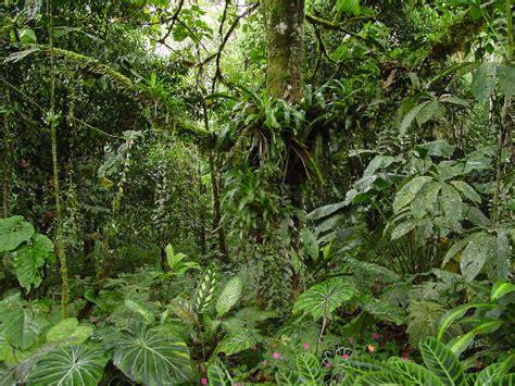 imagenes de animales y plantas de la selva selva y animales abril 2011