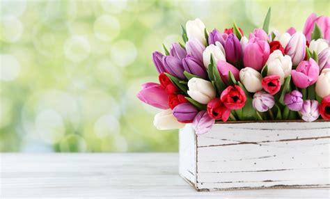 fiori a marzo i giardini di marzo i fiori da curare in questo mese leitv