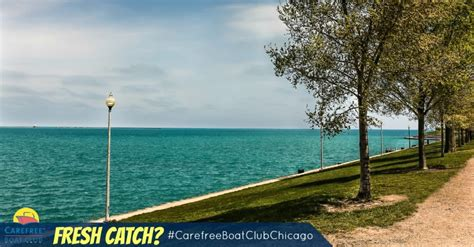 carefree boat club chicago cost chicago fish to eat or not to eat carefree boat club
