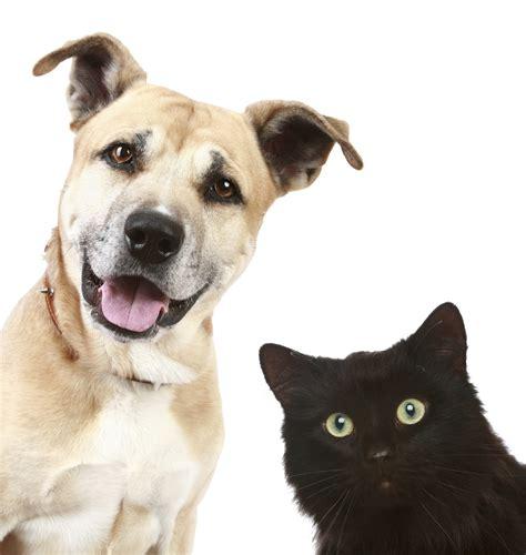 companion animals student animal legal defense fund