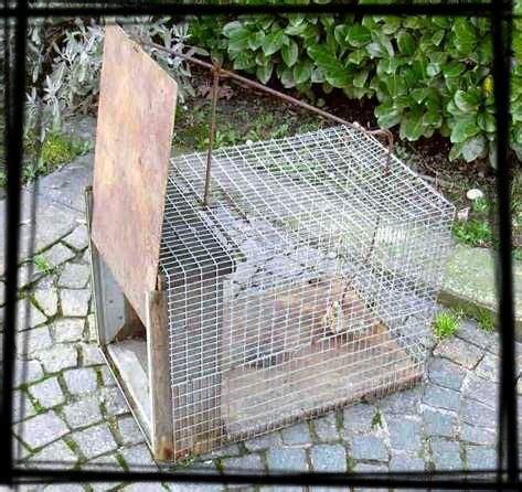 gabbia trappola per uccelli fotografie di trappole per uccelli e mammiferi