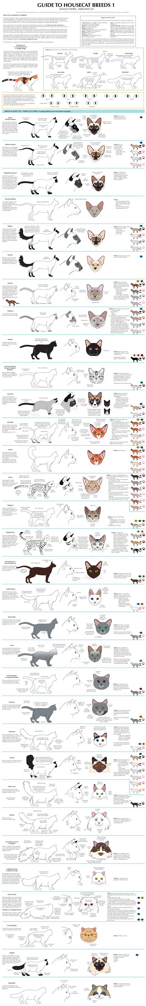 guide breeds guide to housecat breeds 1 by majnouna on deviantart