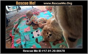 pomeranian rescue mn minnesota pomeranian rescue adoptions rescueme org