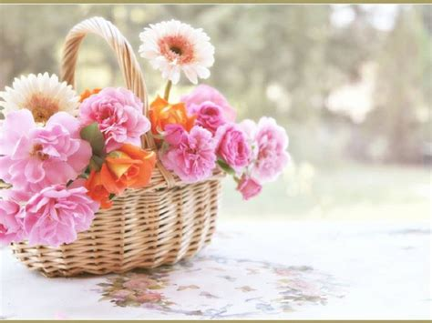 wallpaper flower gift spring flowers wallpapers hd pictures one hd wallpaper
