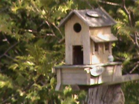 how to attract birds to a bird house