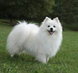 fluffy puppy breeds fluffy dogs picture
