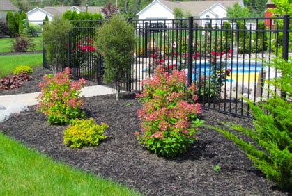 landscaping shrubs and bushes ideas pictures plans