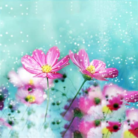 Live Flowers Wallpaper For Pc by Flowers Live Wallpaper For Pc
