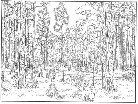 cool graphic gallery of forest coloring page suitable just