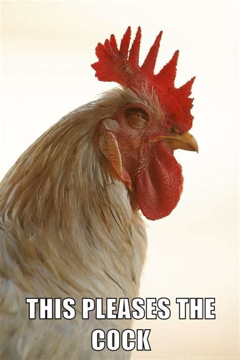 rooster meme this rooster is happy this pleases x your meme