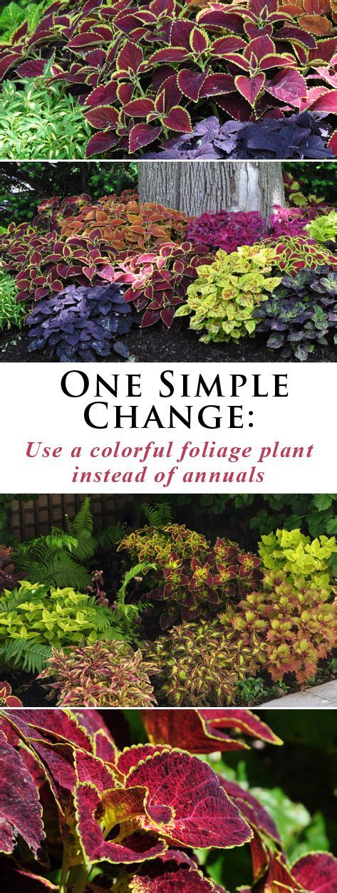 2214 Best Everything Plants And Flowers Images On Pinterest 25 Best Ideas About Garden Plants On Pinterest