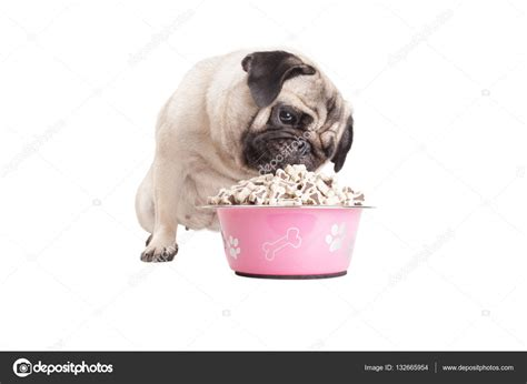 what do pug puppies eat pug puppy kibble food from pink bowl isolated on white background