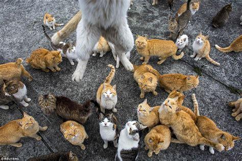 felines rule on ehime s cat island the japan times japan s aoshima island cats outnumber humans six to one