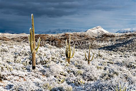 snow in desert fine art photography nature and landscape arizona