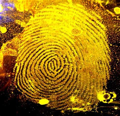 basic yellow from pioneer forensics – latent forensics