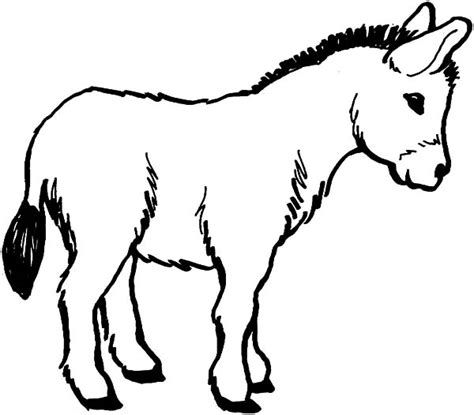 donkey coloring pages preschool animals donkey printable colouring pages for preschool