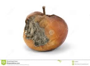 rotten apple royalty free stock images image 9188769