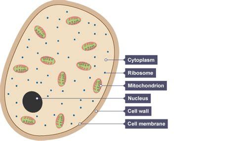 pathogensandebola