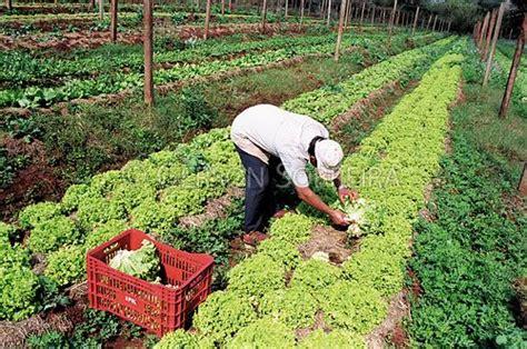 imagenes satelitales para agricultura agricultura