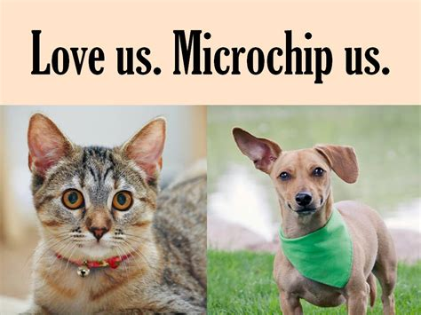 what is a microchip for dogs microchips denver animal shelter